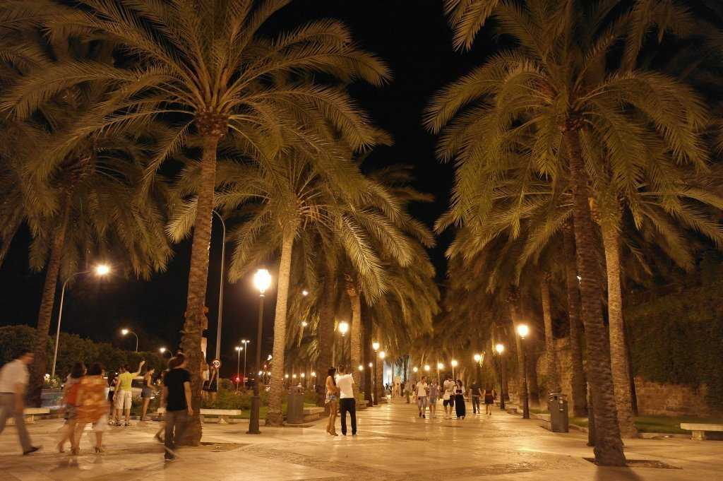 Passeig de Sagrera - Palmiyeler