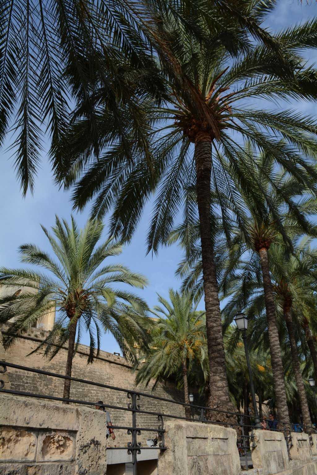 Palmiyeler Palma'nın simgesi :)