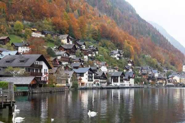 Hallstatt kasabasının sevimli evleri ve göldeki zarif kuğular