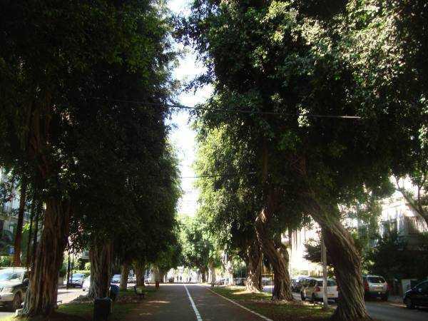Rothschild Caddesi
