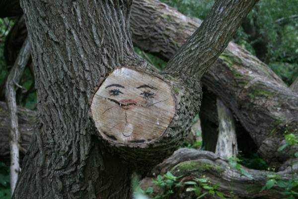 Djurgården da bir ağaçtan detay…