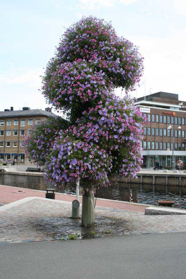 Jönköping'teki çiçek ağacı
