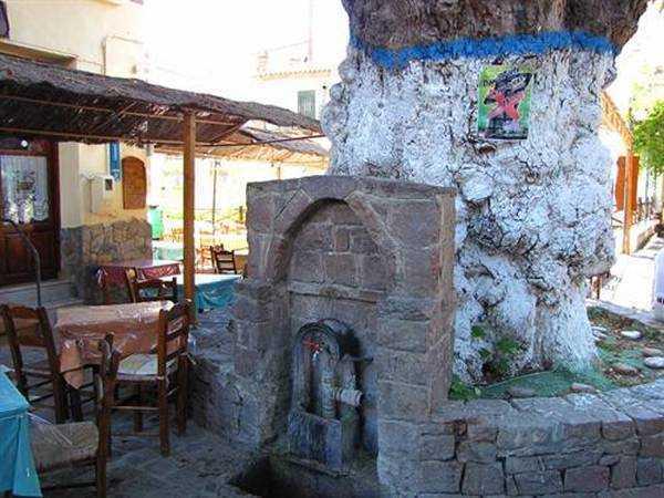 Eski Çeşme ve 300 Yıllık Çınar