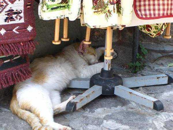 Molyvos'da Öğle Uykusu