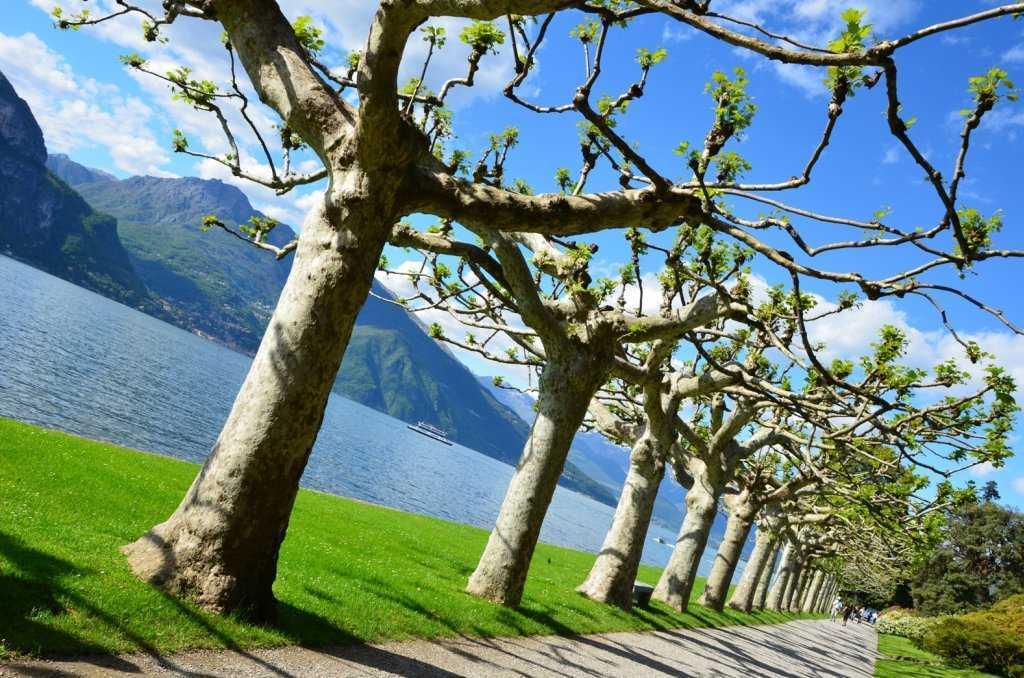 I Giardini di Villa Melzi - Göl kıyısındaki ağaçlı koridor…