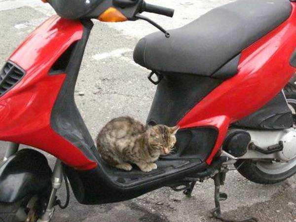 Kos'un motorcu kedileri