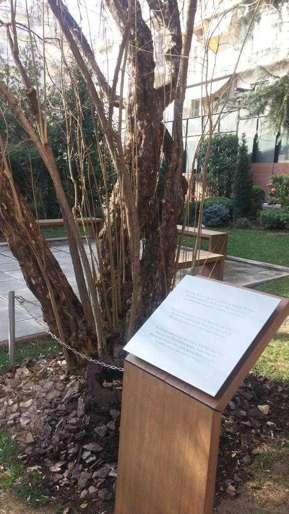 Evin bahçesinde Ali Rıza Bey'in diktiği ağaç